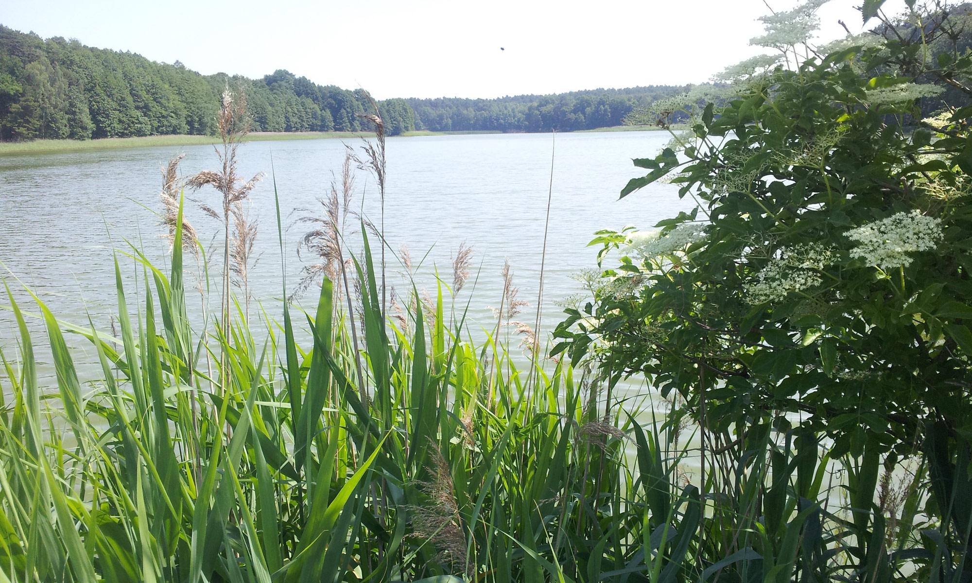 Fischerei Friedland